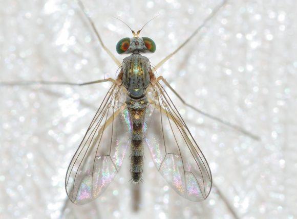 Som en fluga på väggen - medlyssning och sambesök